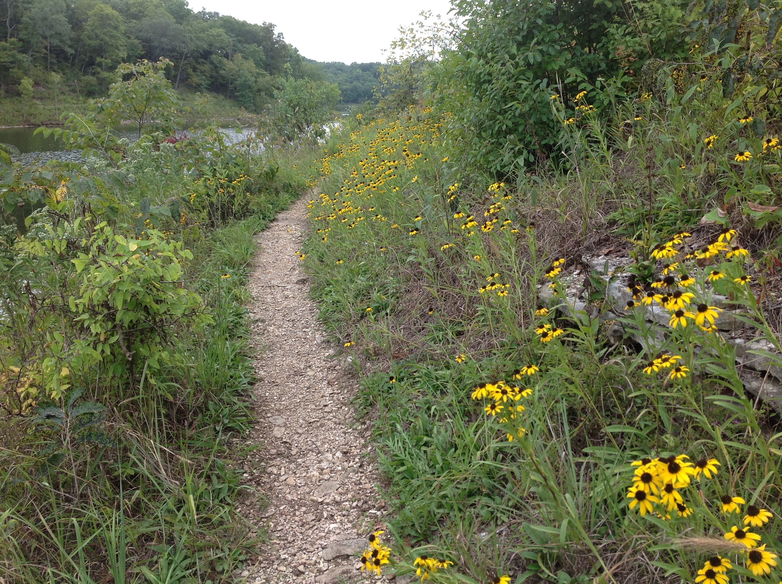 Path with yellow flowers